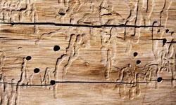 tratamiento madera Tratamiento de madera