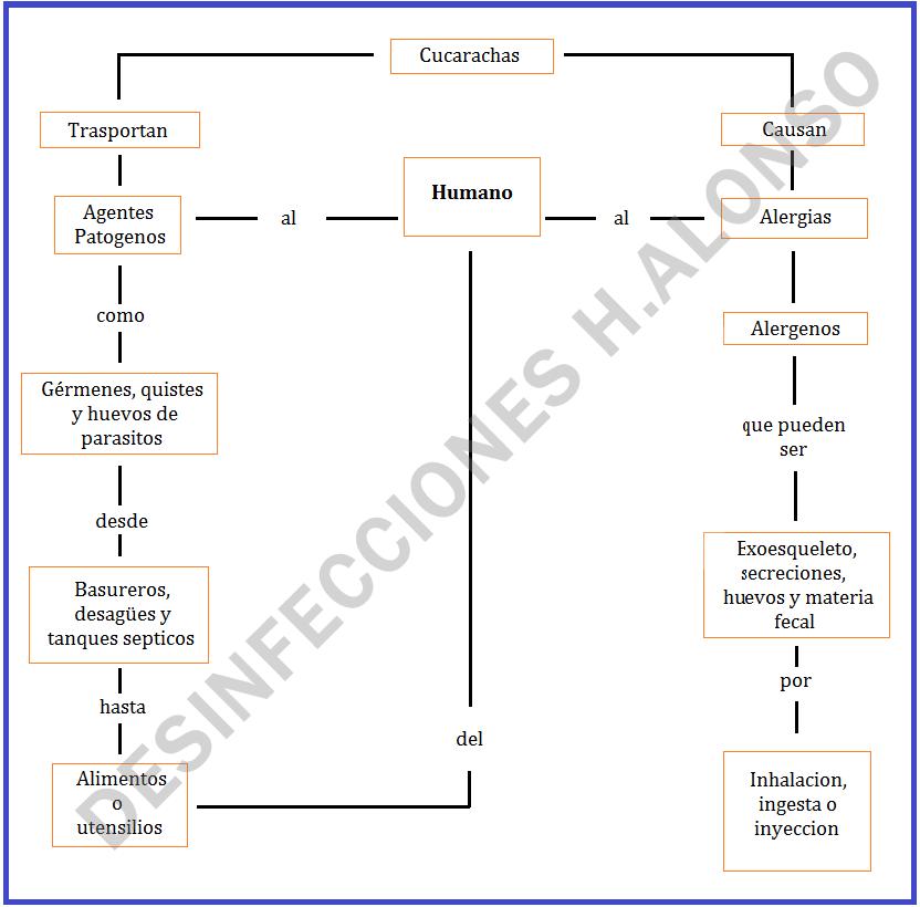Esquema de transmisión de enfermedades de la cucaracha